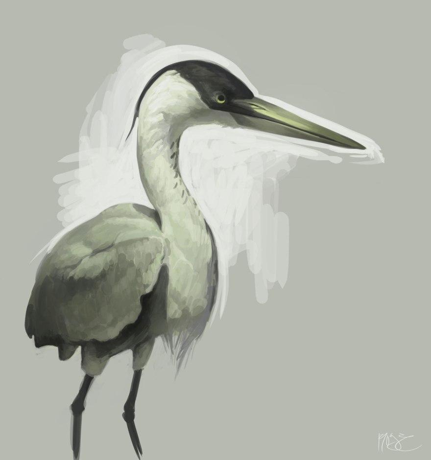bird_study